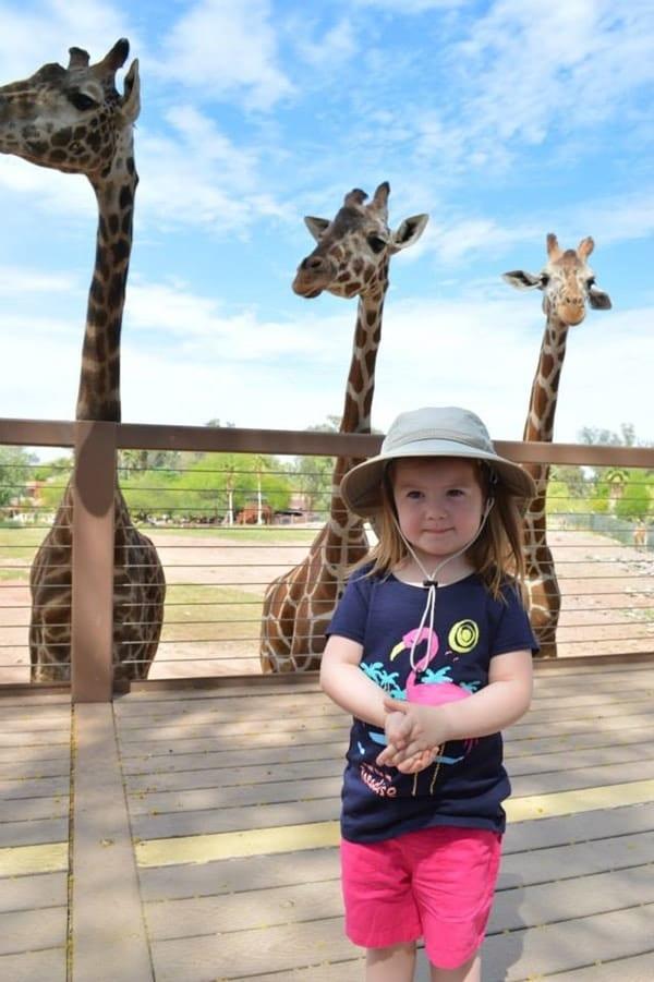 vanessa-giraffes