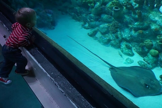 harry-and-sting-ray