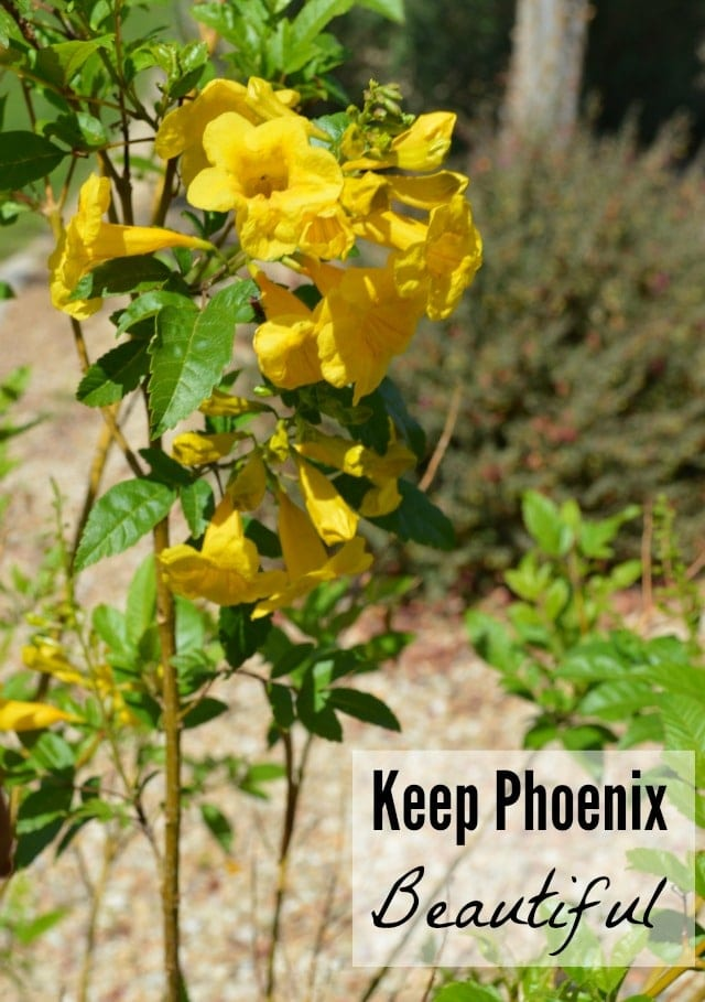 keep-phoenix-beautiful