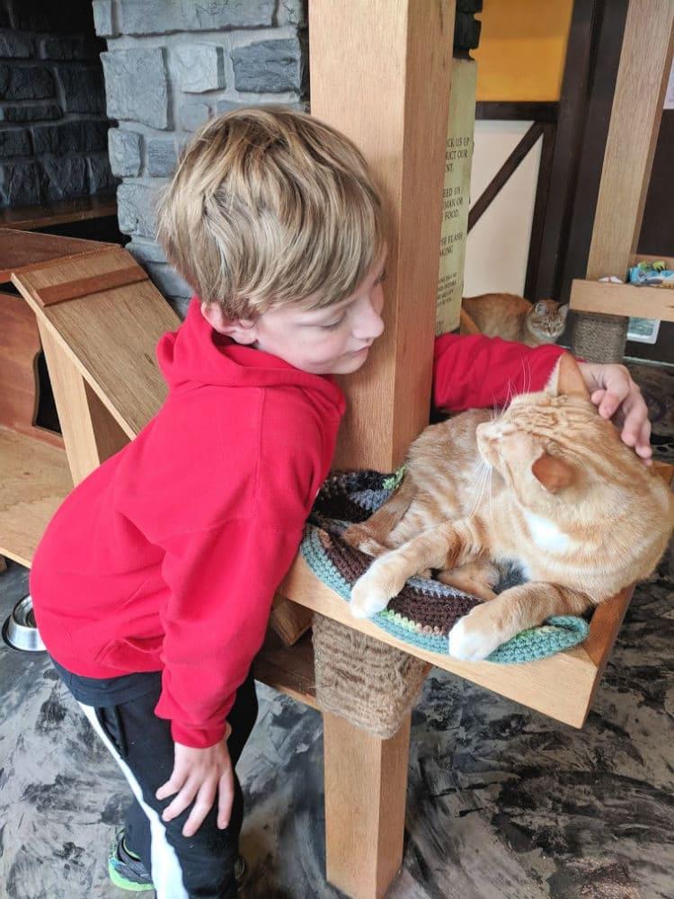carter petting ginger cat