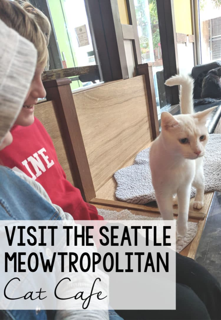 seattle meowtropolitan cat cafe